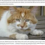 「世界一長寿」と報じられた猫 31歳で天寿を全う(英)