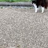「ハリネズミか?」「いやヤマアラシかも?」 怒り心頭の猫に…ネット騒然!