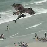 オスプレイ最恐。シャーク?を鷲掴みで飛ぶド迫力映像に全米震撼