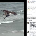 ビーチ上空を飛ぶ鳥、鉤爪で掴んでいるのはサメ?(米)<動画あり>
