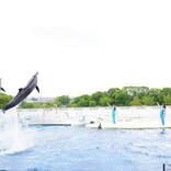 京都水族館、イルカと人の「心の交流」を体験できる新パフォーマンスを開始