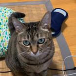 """かまってほしい猫が""""アレ""""を封じてきて……? 写真がツイッターで大人気 - 「すごい賢い」の声"""