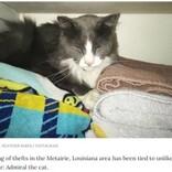 玄関前に謎の衣類、近所から洗濯物を盗んだ猫の仕業と知り飼い主唖然(米)
