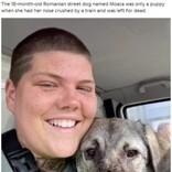 事故に遭い鼻を失った犬、優しい飼い主が見つかり幸せに暮らす(ルーマニア)