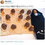松本人志さん「きのこの山で寝袋で寝るパパらしいです」Twitterにシュールな画像を投稿 陶器の作者も感激
