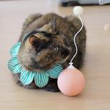 猫のひとり遊びに「電動猫じゃらし」ってどう?遊ばせてみたら可愛い反応が…