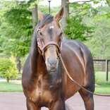 「ディープ最後の産駒」が5億1000万円で落札 過去には驚愕の6億超えという馬も