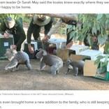 豪の森林火災を経て5匹のコアラが半年ぶりに住処に お腹には新しい命も