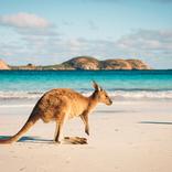 オーストラリアにはヌードビーチがある?【知ればオーストラリア雑学王5】