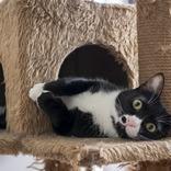 保護猫を育てた女性 1年が経過して気が付いた『事実』に、驚きの声が続出!