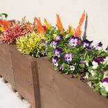 ガーデニングにおすすめの秋の花特集!花壇や鉢植えを秋色にコーディネート♪