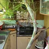 1か月ぶりに訪れた祖父母の家 キッチンで、目を疑う光景に…