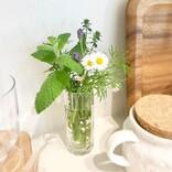 愛らしいお花がいつも傍に。心癒される植物のある暮らしのインテリア術