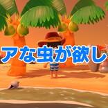 【あつ森】「レアな虫が全然捕れない」の巻 / 第14回「あつまれ どうぶつの森」日記