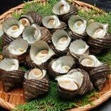 海女の男性版「海士」が採る新鮮サザエを買って! 愛媛・佐田岬