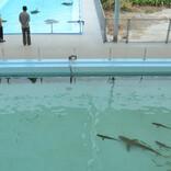 【特集】徳島の旅ライターが四国の注目場所を紹介 第2回 廃校が水族館となった「むろと廃校水族館」のお勧めを紹介
