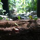 働きアリの生態はサラリーマン社会に酷似していた。超絶ブラック企業の種も存在