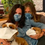 コートニー・コックスの愛犬達が「マスクをつけて!」 ジェニファー・アニストンも一緒に動画で呼びかけ