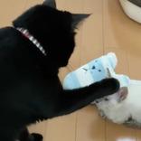 突如現れた『新入り』に対し、黒猫が…? その後の展開に「笑った」「かわいい」
