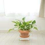 植物枯らしちゃう問題、これで解決できそう! 電源不要なのに自動吸水って便利だな