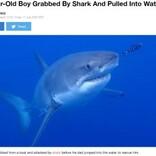 「ボートの上にいたのに」サメが10歳少年を襲う 豪でサメ被害続出の原因とは?