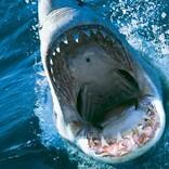 """サメー""""Summer""""シーズン到来! 王道からトンデモまで、2020年に到来するサメ映画"""