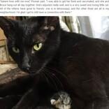 朝5時に顔なじみの野良猫の訪問を受けた女性「赤ちゃんを産むためだったの!」(米)