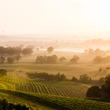 新・ワイン大国!世界最古のブドウの木がなぜココに?【知ればオーストラリア雑学王7】