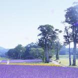 """【たんばらラベンダーパーク】""""3密""""を避ける旅先として注目! ラベンダーの彩りと香りを満喫しながら高原散歩へ"""