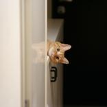 """お風呂やトイレを覗きにくる…猫に""""あるある""""なナゾ行動。専門家に直撃"""