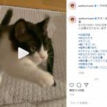 ミキ亜生、飼い猫のおかげで仕事急増?「スケジュール追いつかないわ」