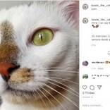 青と緑の美しい瞳を持つオッドアイの猫「ボウイ」名前はあの世界的アーティストから(スペイン)