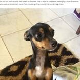 車椅子の飼い主が動きやすいように、家のマットを移動する犬(ブラジル)<動画あり>