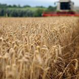 ハイテクな「垂直農法」は、私たちの未来の食を支える期待の星となるのか...?