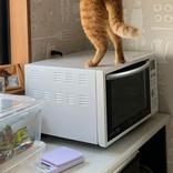 おやつを物色する愛猫 『犯行の瞬間』を捉えた1枚が話題 「笑った」「油断もすきもない」