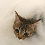 """片岡愛之助、愛猫""""まー之助""""の入浴ショットにメロメロ"""