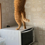 オヤツへの執念おそるべし……猫が2本足で棚を開ける「犯行現場」を捉えたスクープ写真にツイッターで反響
