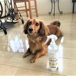 犬もコロナウイルス陽性反応の報告が!ペットにも安心な除菌スプレーとは