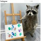 肉球で描いた貴重な絵をオンラインで販売するアライグマ 「ドヤ顔してない?」「ルーヴル美術館に展示されてもおかしくない」