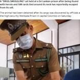 動物を使った麻薬取引が横行 刑務所内へ猫が薬を運び込む(スリランカ)