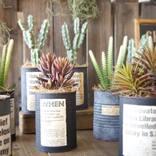 インダストリアルグリーンの魅力♪テイストの味を引き出す素敵な観葉植物たち