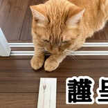 【お猫様へ】ちゅ~る専用ポチ袋がついてくる! 短歌集『猫のいる家に帰りたい』のふろくが秀逸