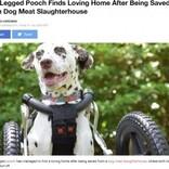 「肉を柔らかくするため」前足を切断された犬 中国の犬肉処理施設から救出され第2の人生を歩む<動画あり>