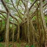 木の幹から子どもの声が…、遭難時に助けてもらった家がダム建設で…誰も信じてくれない摩訶不思議な現象