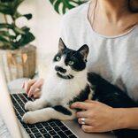 猫にとって、ずっと家にいる飼い主はストレスの元凶だった!?