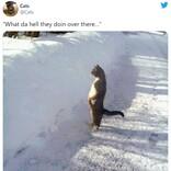ネコだって自覚ある? どう見ても立ち姿がネコじゃないネコたち 5選