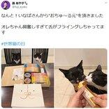 """藤あや子さん「なんと!いなばさんから""""おちゅ~る元""""を頂きました」 可愛い猫の画像ツイートに反響"""