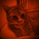 """自称""""猫好き""""芸能人に批判!『今くら』猫特集に「しょーもない奴ばっか!」"""