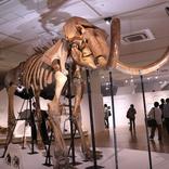 『マンモス展 その「生命」は蘇るのか』太古の生物たちを身近に感じることができる展覧会の鑑賞レポート