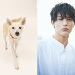 林遣都×中川大志×篠原哲雄監督の映画『犬部!』が2021年公開へ 「動物を愛し、救おうとしている方が沢山います」